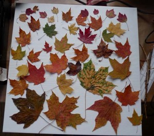 Maple Leaf Layout for encaustic collage by Maike's Marvels