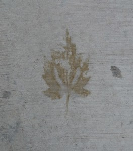 photograph of leaf imprint on concrete by Maike's Marvels