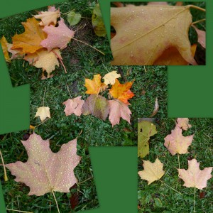 maple leaf collages blown by the wind