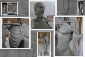 Skeletal and Muscle sculptures at Vitruvian Art School