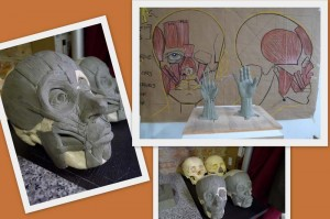 skulls and hand sculptures at Vitruvian Art School