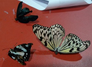 crispy butterflies