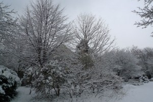 narnia woods