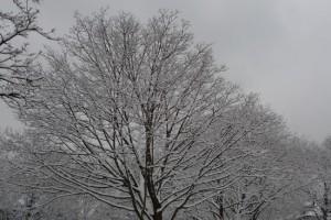 treecrown