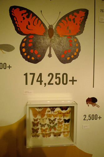 thousands or butterfly species