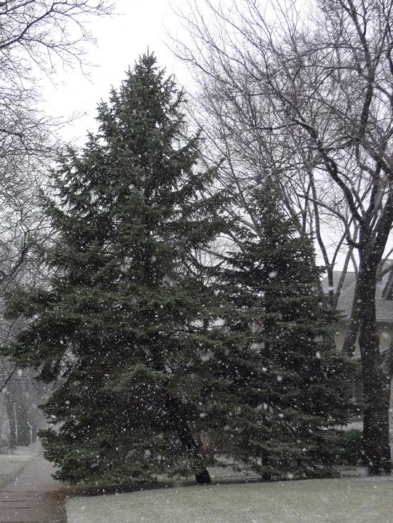 snowfall photograph by Maike's Marvels