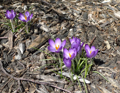 Deceptive Croci