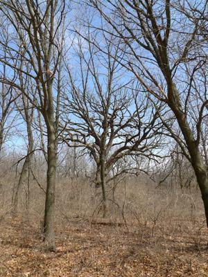 gnarlytree