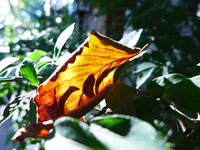 leafblog