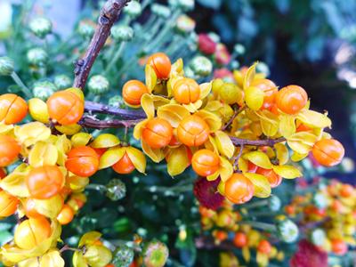 orangeblog
