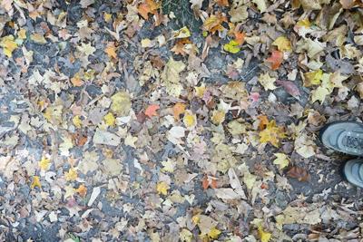 leafyness