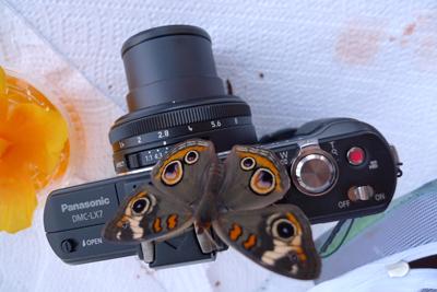 BuckeyeCamera