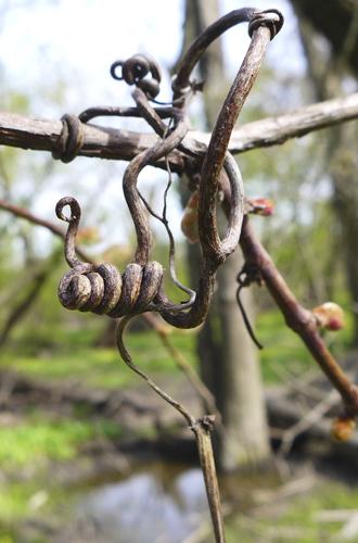 VineSpiral