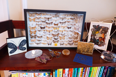 Butterflyshelf