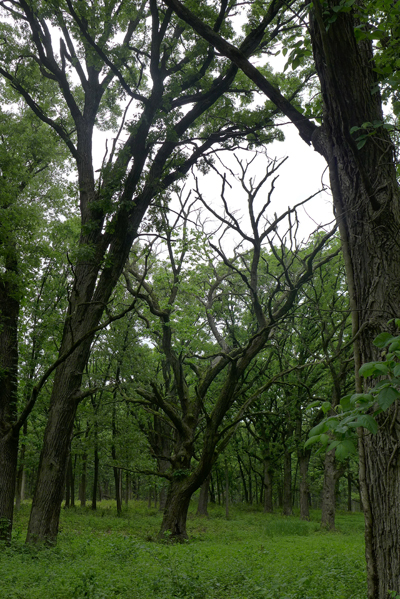 darktrees