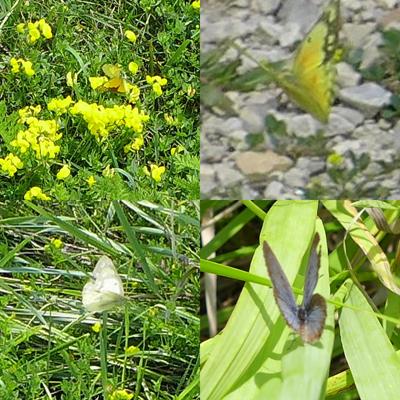 ButterflyCam2