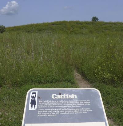 Catfisheye