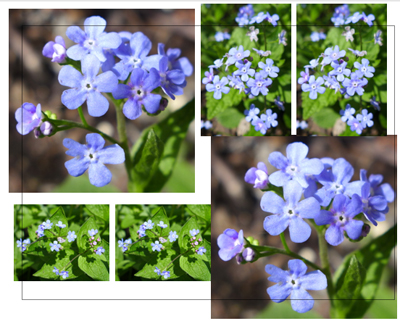CollageSheetForgetmenots