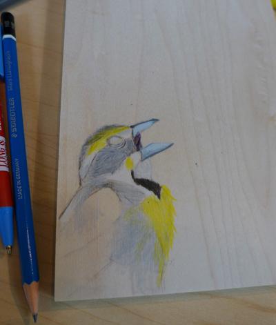 ColoringThebird