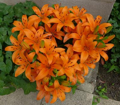 OranjeBloemen