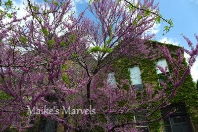 blossomtree-1