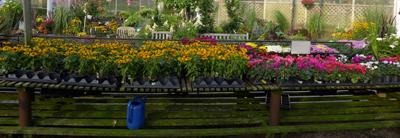 Plattflowers