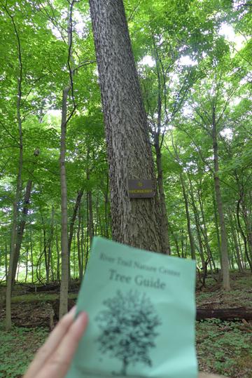 treeguide