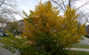 fall colors photograph by Maike's Marvels