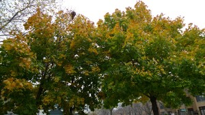 photograph of fall trees by Maike's Marvels