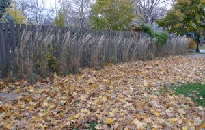 photograph of an autumn path by Maike's Marvels