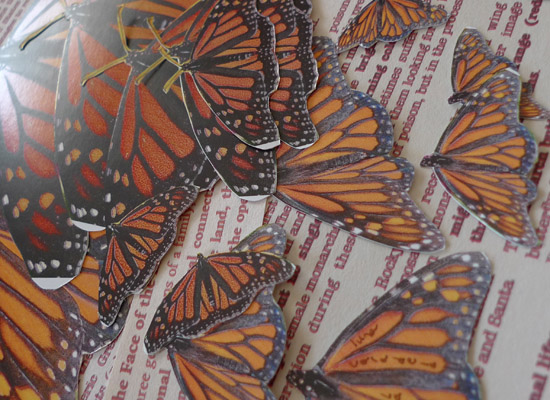 photos of monarchs arranged on paper by Maike's Marvels