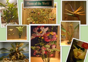 plant models at Chicago's Field Museum