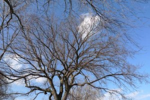 clouds and branches by Maike's Marvels