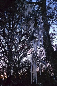 icicles photographed by Maike's Marvels