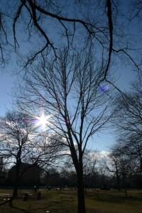 sunburst tree by Maike's Marvels