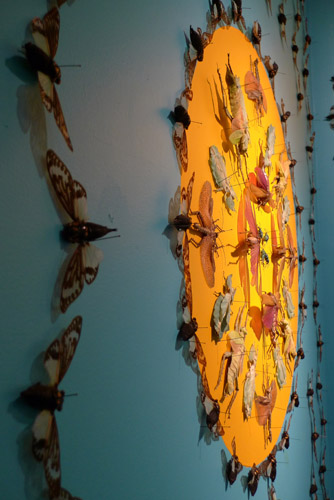 Meticulous Beauty Wall