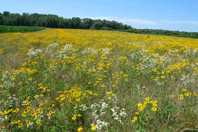 09Wildflowerfields