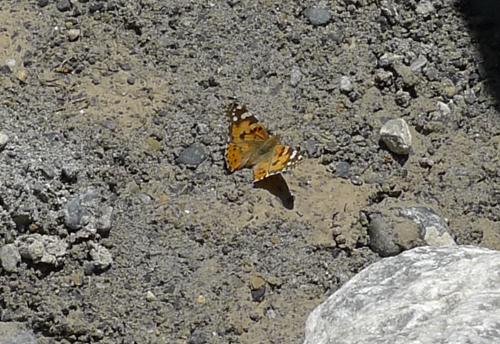 33SGButterfly