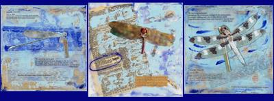 FBDragonflies400