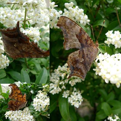 underwings1