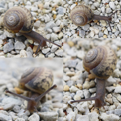 SnailStudy