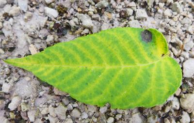 leafbeauty