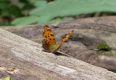 10_VermillionRiverTrailComma