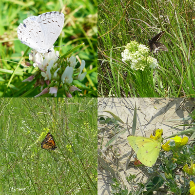 ButterflyCam1