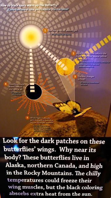 HeatButterfly