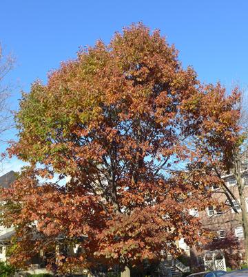 browntree