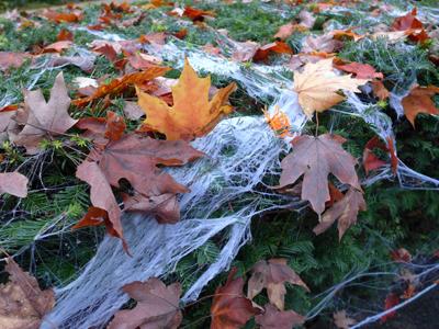 spiderwebleaves