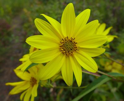 YellowFlowerofHope
