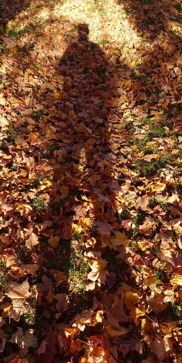 longlegsshadow