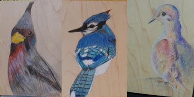 BirdDrawingResults1